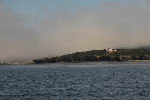 WoodyPoint027