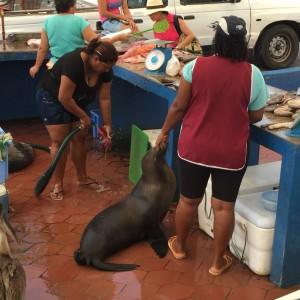 Ayora fish market