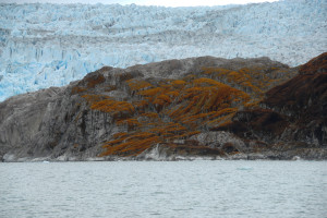 moraine lichen at Seno Iceberg