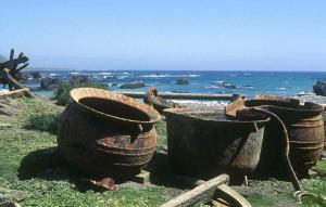 Macquarie Island pictures