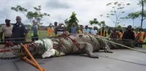 Gatun croc